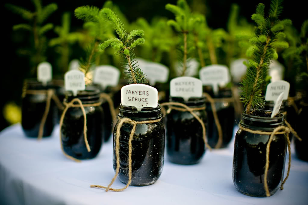 Wedding Gift Souvenir Ideas: WedWed: Eco Freindly Wedding Favors
